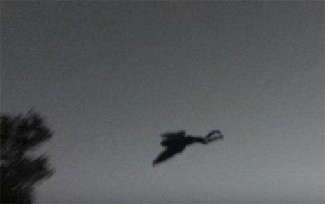 2005_mothman