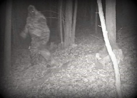 2025_trailcambigfoot